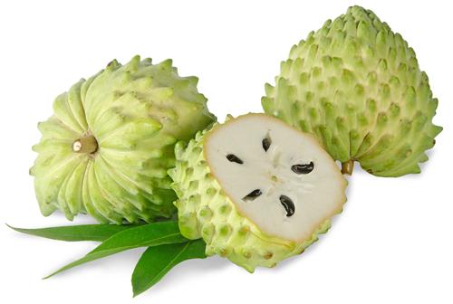 Graviola fruto