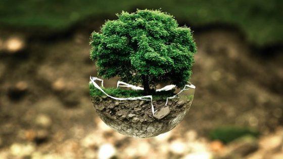 Árbol futuro sostenible